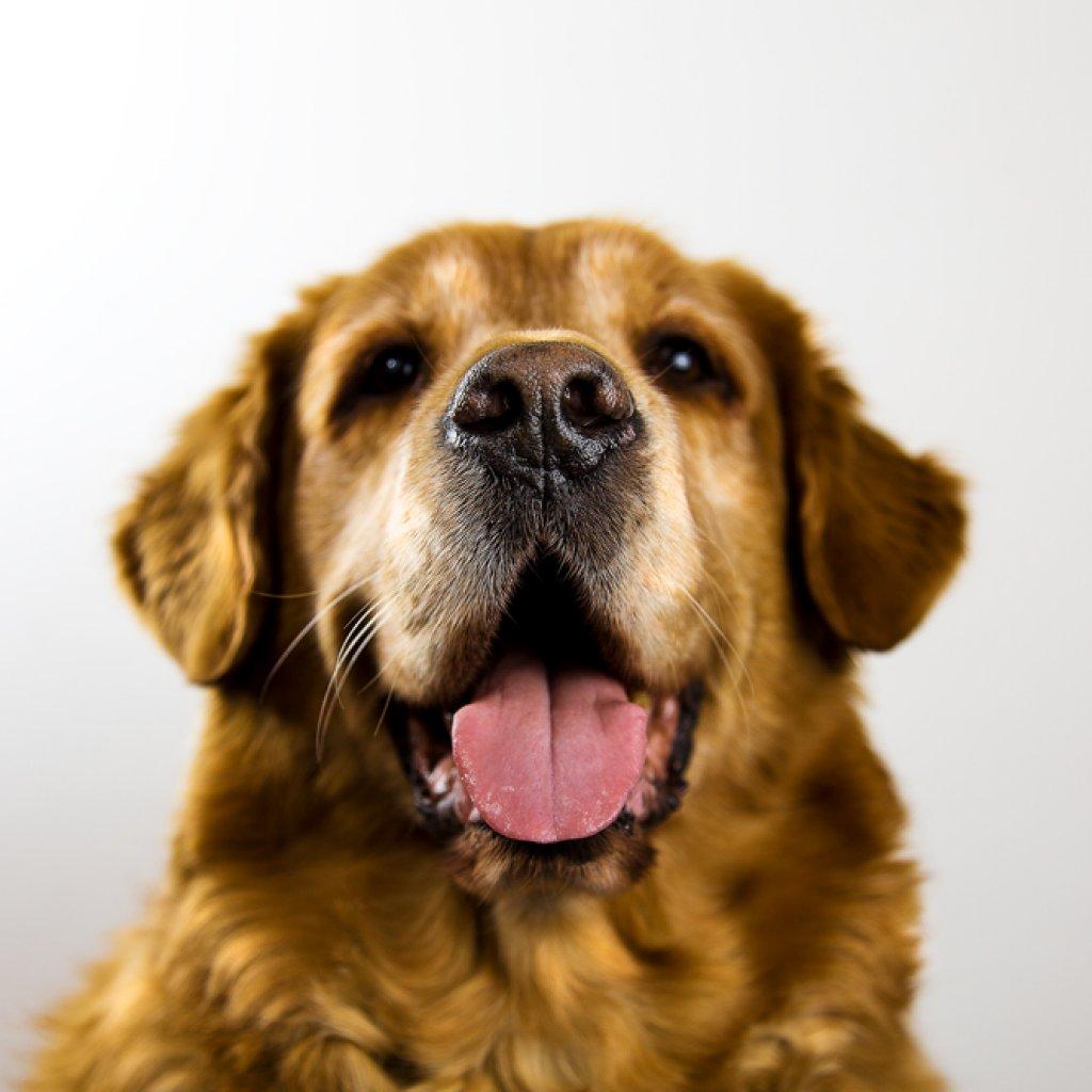 Sam-da-Dog_2